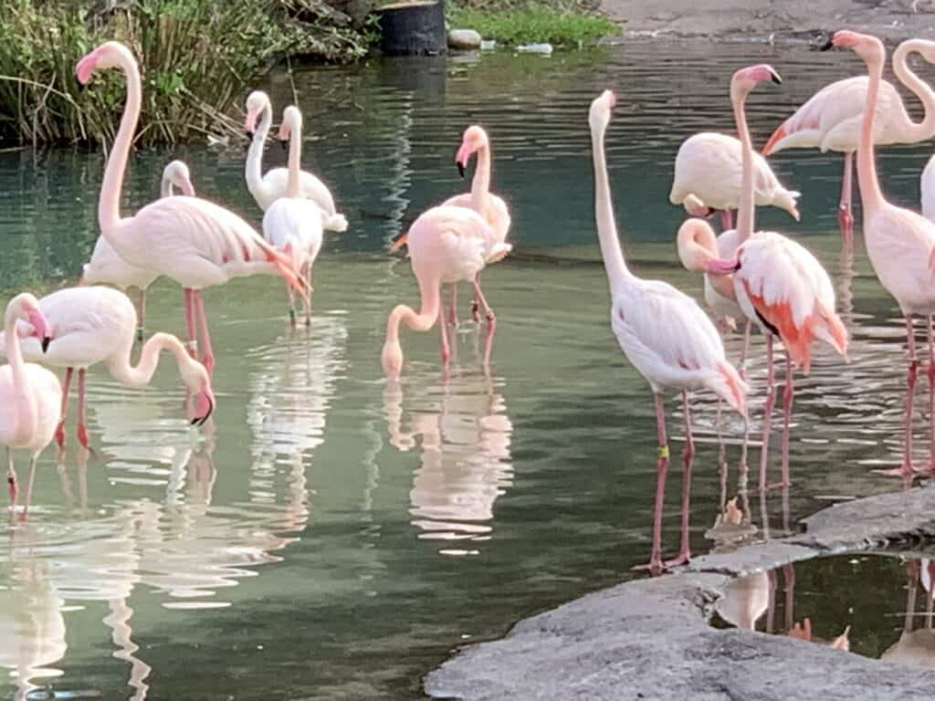 Flamingos in Florida